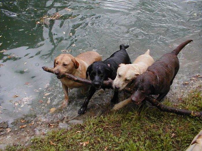 http://charivniyoberig.com/images/dogs-humor/sobaki_0009.jpg